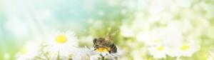 Insektenschutz_Fliegengitter