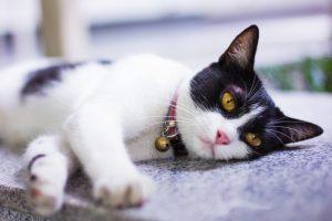 Insektenschutz für Haustiere