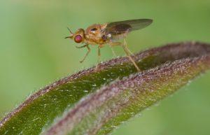 insektenschutz-24