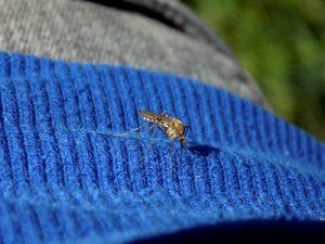 Permethrin: Insektenschutz in Textilien